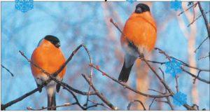 Страницы из Колокол №1 январь 2012